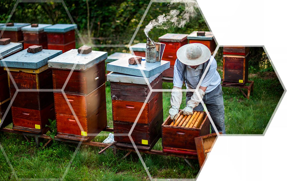 Bee Keeper_Hex Pattern Flip