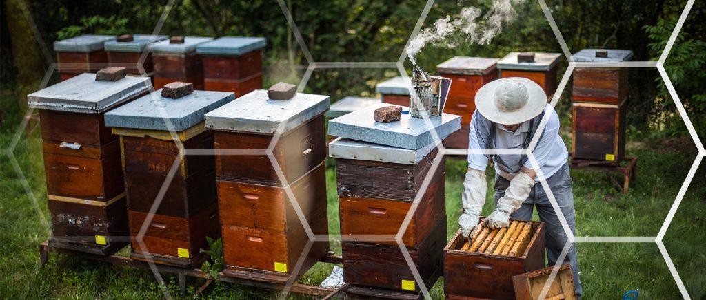 Bee Keeper_Hex pattern full